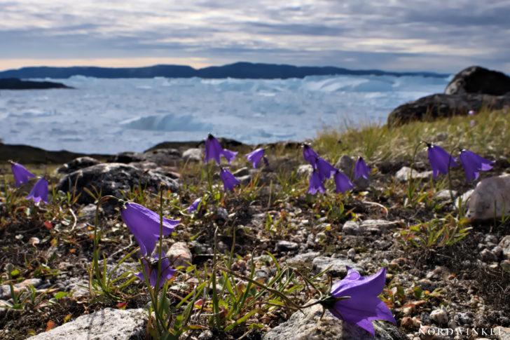 Ilulissat Eisfjord 2018 II