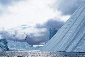 big, blue Icebergs inside the icefjord near Ilulissat