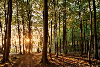 golden morning sun breaks through the green forest