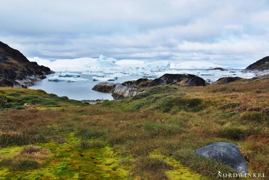 grüne wiese vor dem ufer des eisfjords in ilulissat