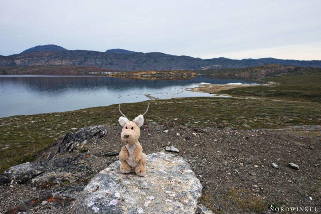 Stoffkänguru auf Trekking-Tour vor einem See in der arktischen tundra