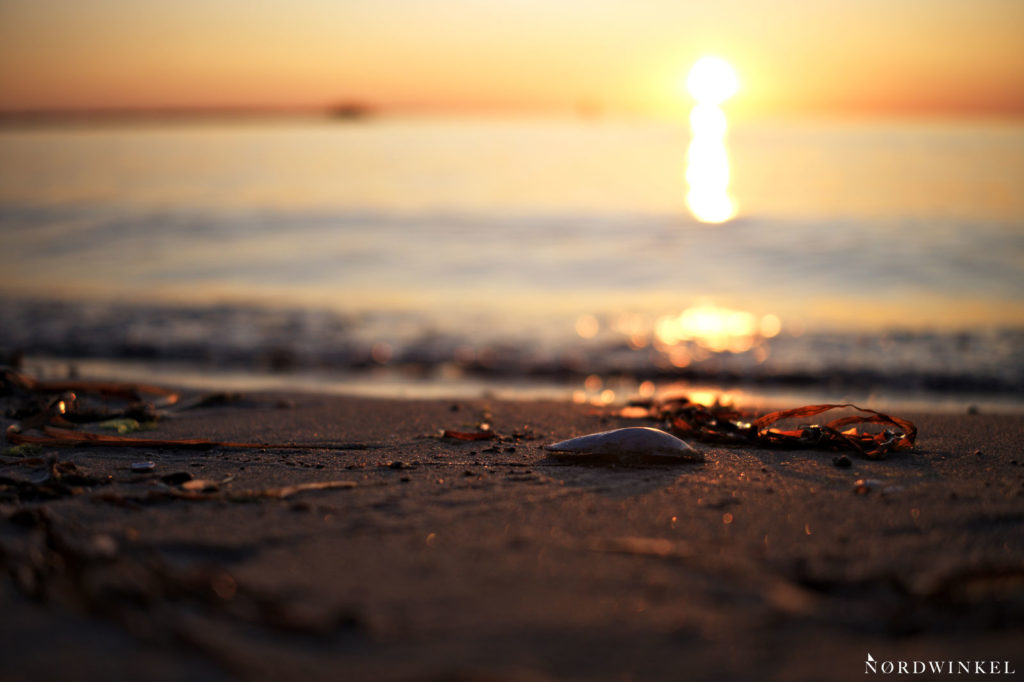 muschel am strand in unschärfe