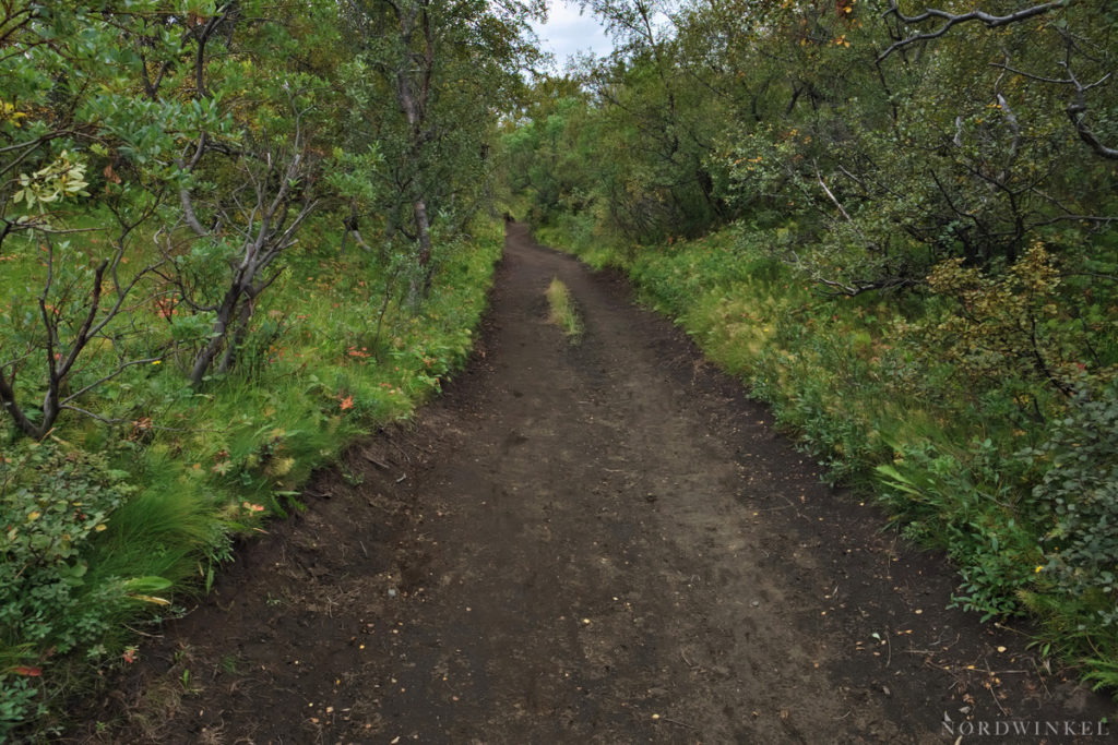 Birkenwälder säumen den Laugavegur auf der Schlussetappe